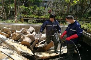 小工坊,大事业——标本模型制作中心奋力清洗长须鲸骨骼