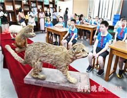 60多岁的动物标本修好了!102岁教师林有禹说,希望它们继续服务好学生