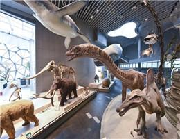 """变流量为""""留量""""!原来你是这样的上海自然博物馆"""