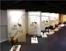"""关于牛的""""十万个为什么"""",这个展览都能告诉你!"""