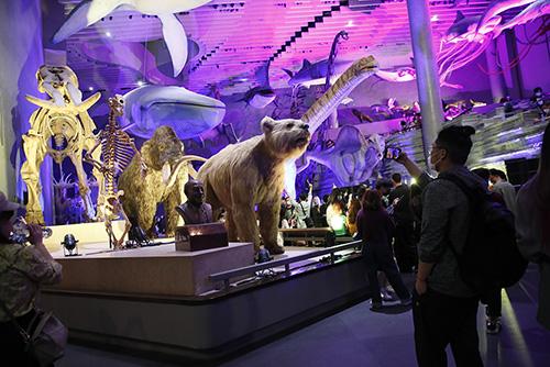 当好奇心遇到标本——上海自然博物馆举办2021年首场博物馆之夜活动